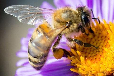 sone con abejas significado
