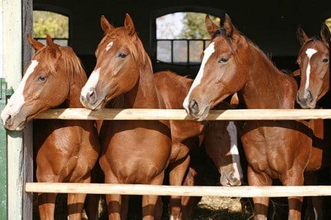 sone con caballos significado