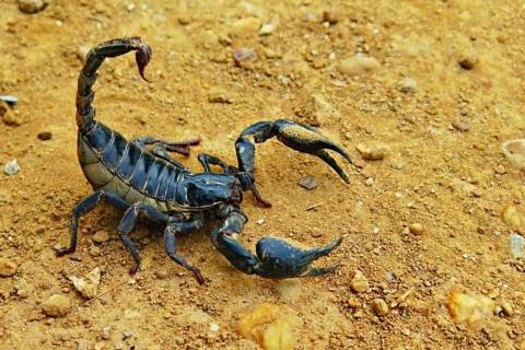sone con escorpiones significado