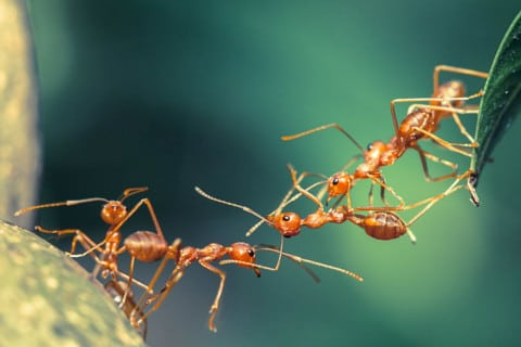 sone con hormigas significado