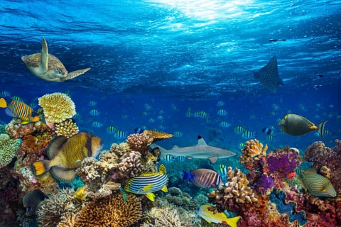 sone con peces significado