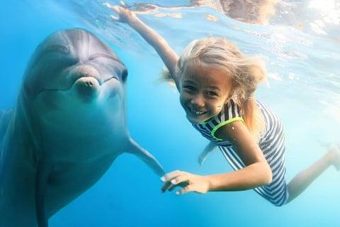 sone con delfines significado