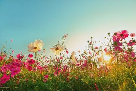 sone con flores significado