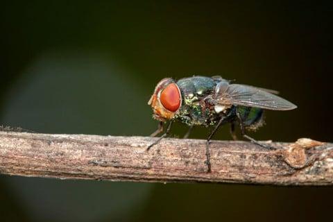 sone con moscas significado