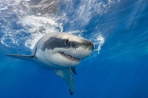 sone con tiburones significado