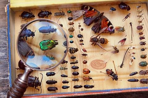 sone con insectos significado