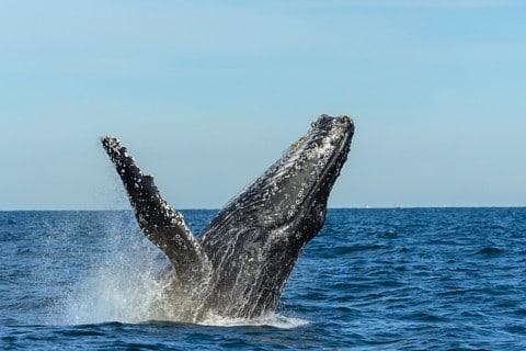 sone con ballenas significado