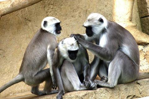 sonar-con-monos