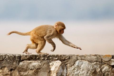 sone con monos que significa