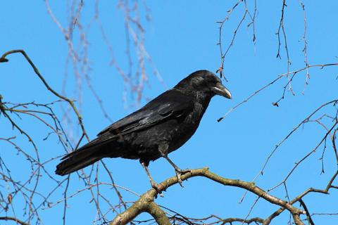 sonar-con-cuervos