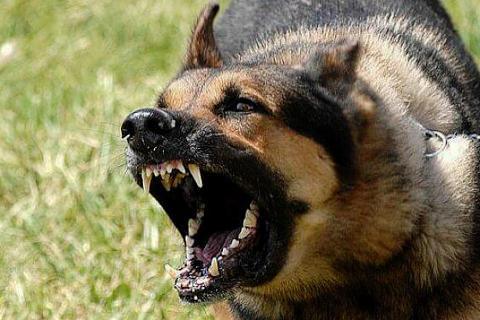 sonar-que-te-muerde-un-perro