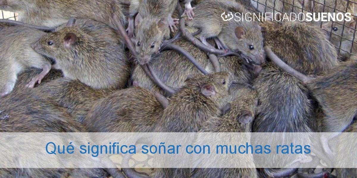 Qué significa soñar con muchas ratas