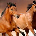 ¿Qué significa soñar con caballos?