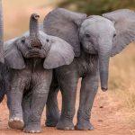 ¿Qué significa soñar con elefantes?