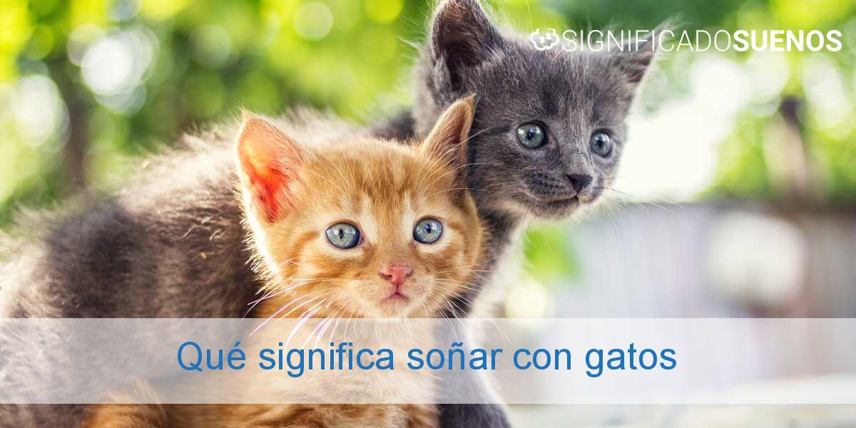 Qué significa soñar con gatos