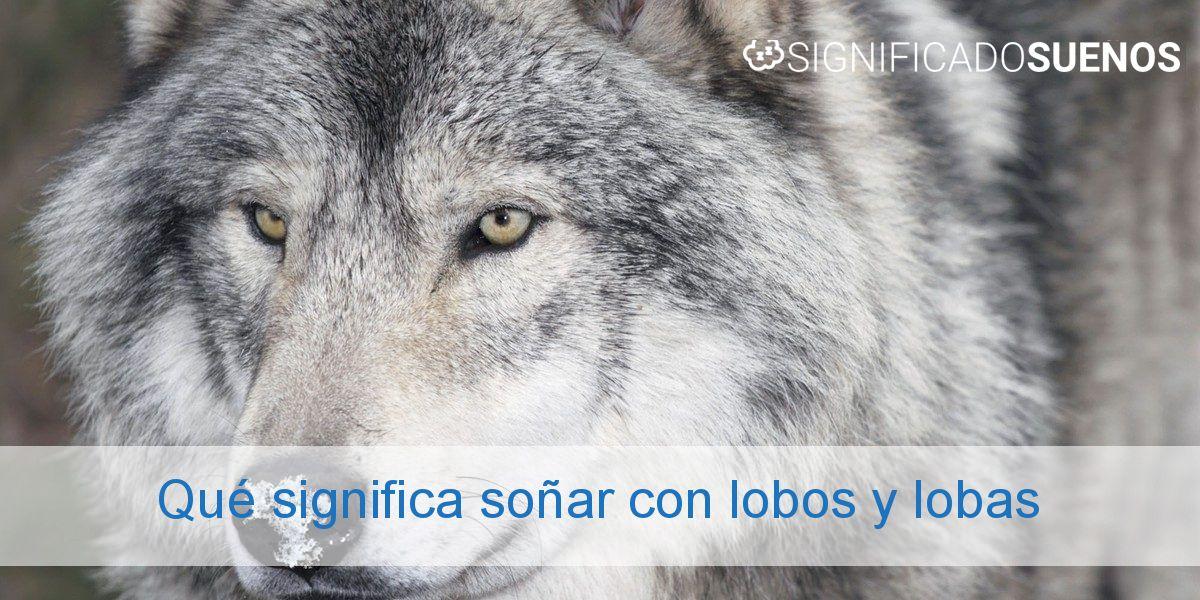 Qué significa soñar con lobos y lobas