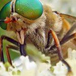¿Qué significa soñar con moscas?