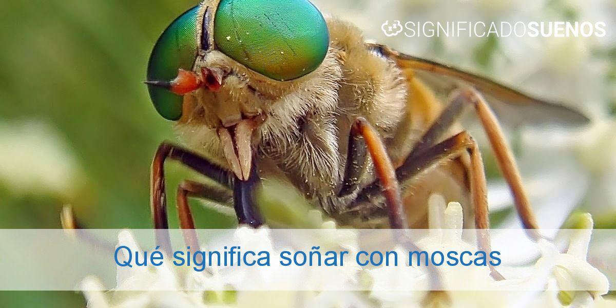 Qué significa soñar con moscas