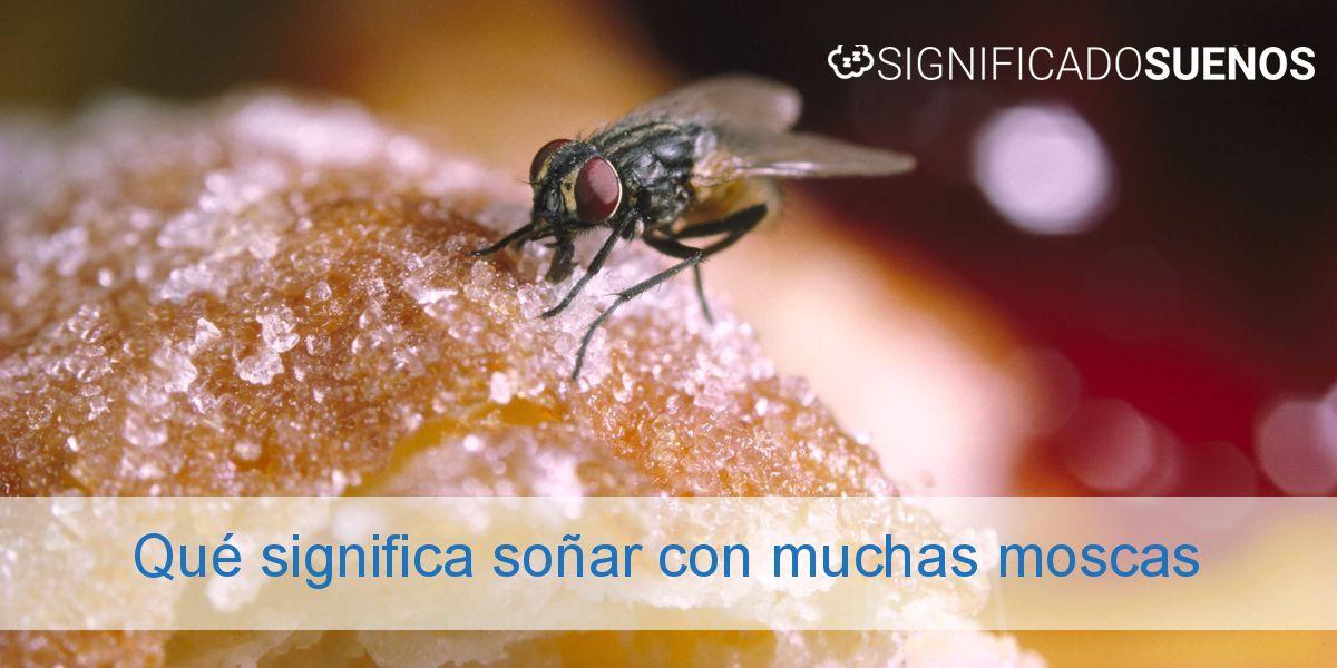 Qué significa soñar con muchas moscas