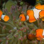 ¿Qué significa soñar con peces o pescado?