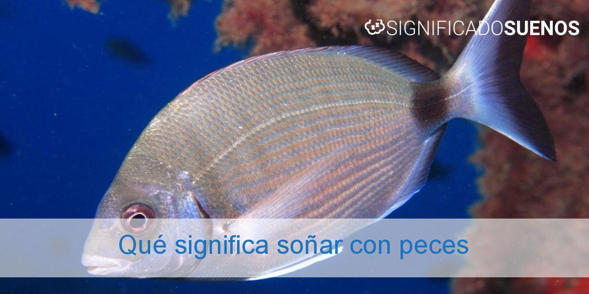 Qué significa soñar con peces