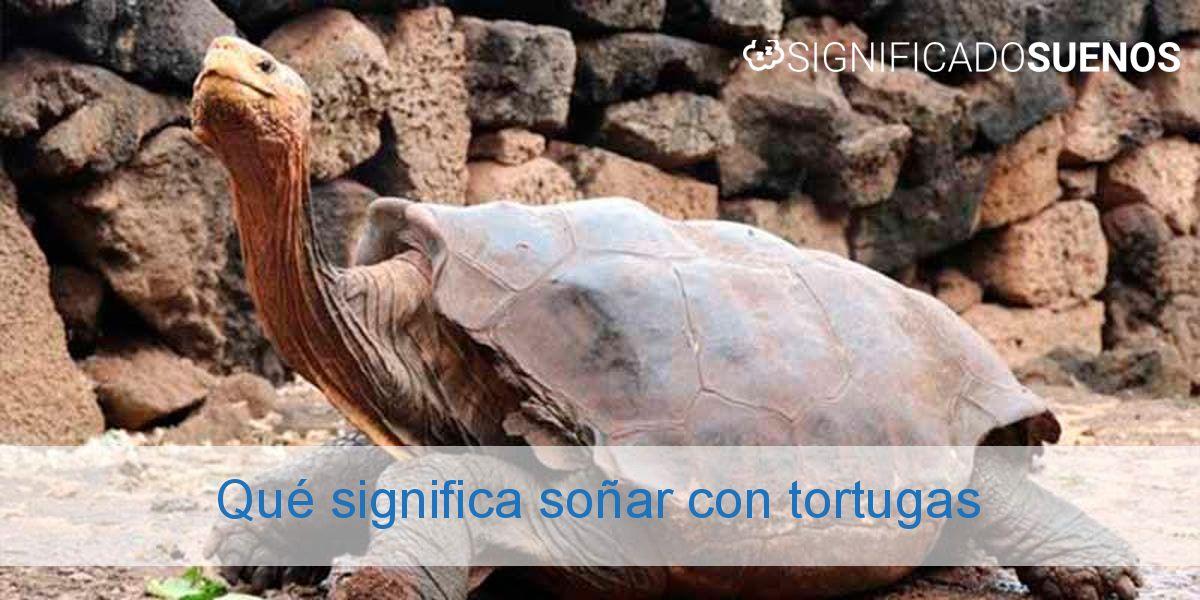Qué significa soñar con tortugas