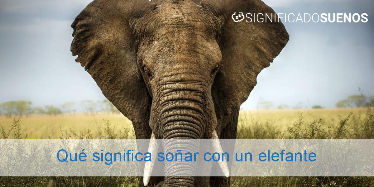 Qué significa soñar con un elefante