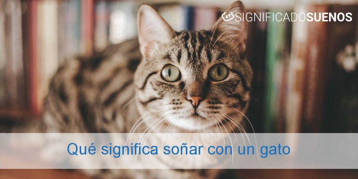 Qué significa soñar con un gato