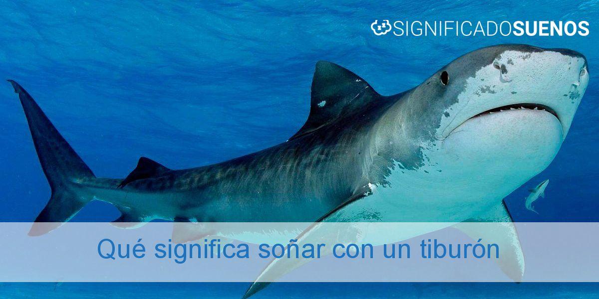 Qué significa soñar con un tiburón