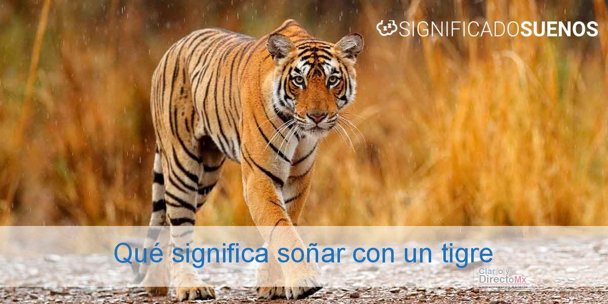 Qué significa soñar con un tigre