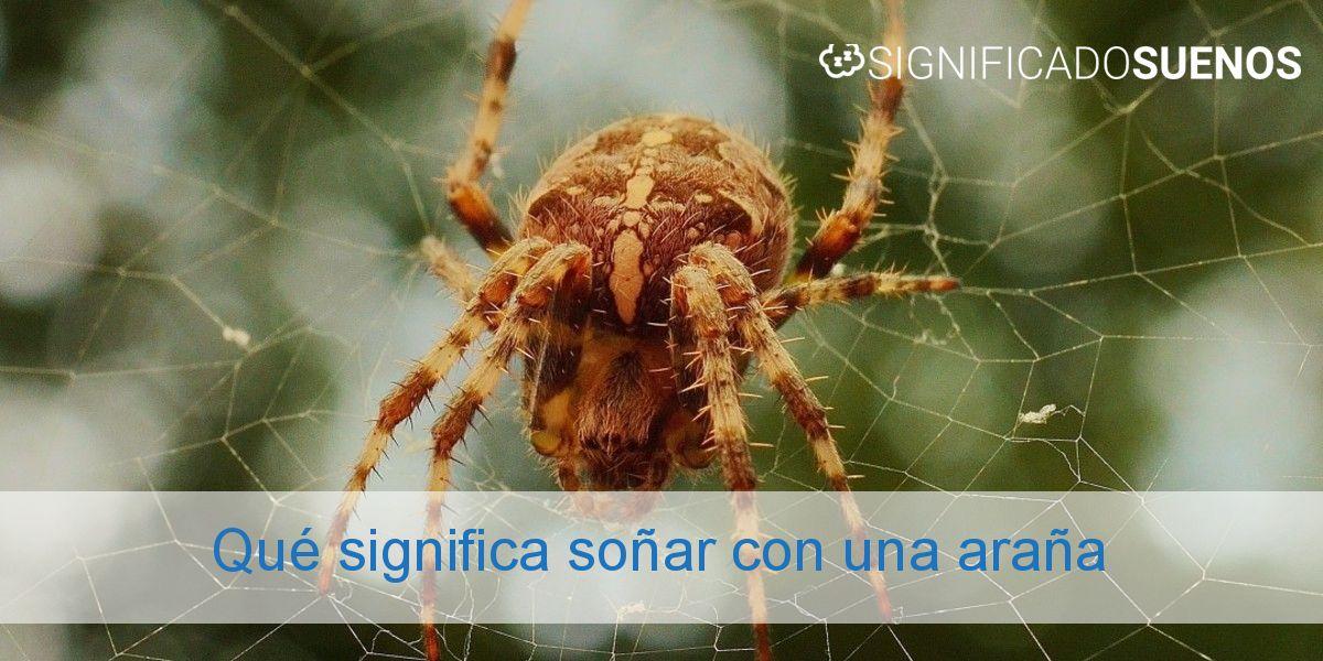 Qué significa soñar con una araña