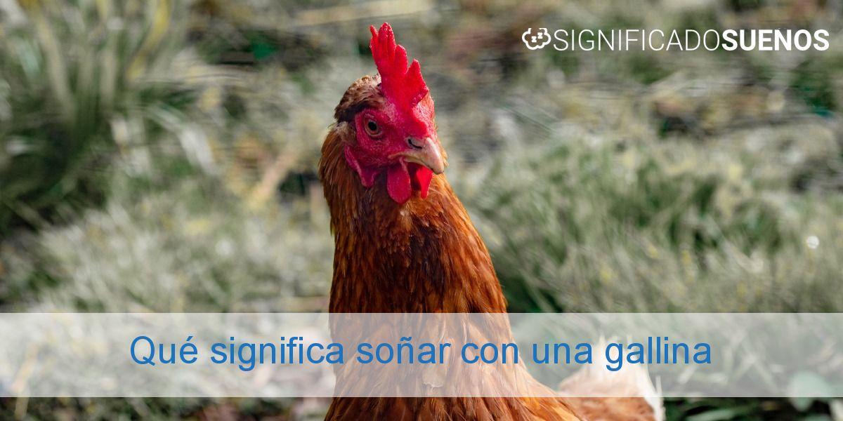 Qué significa soñar con una gallina