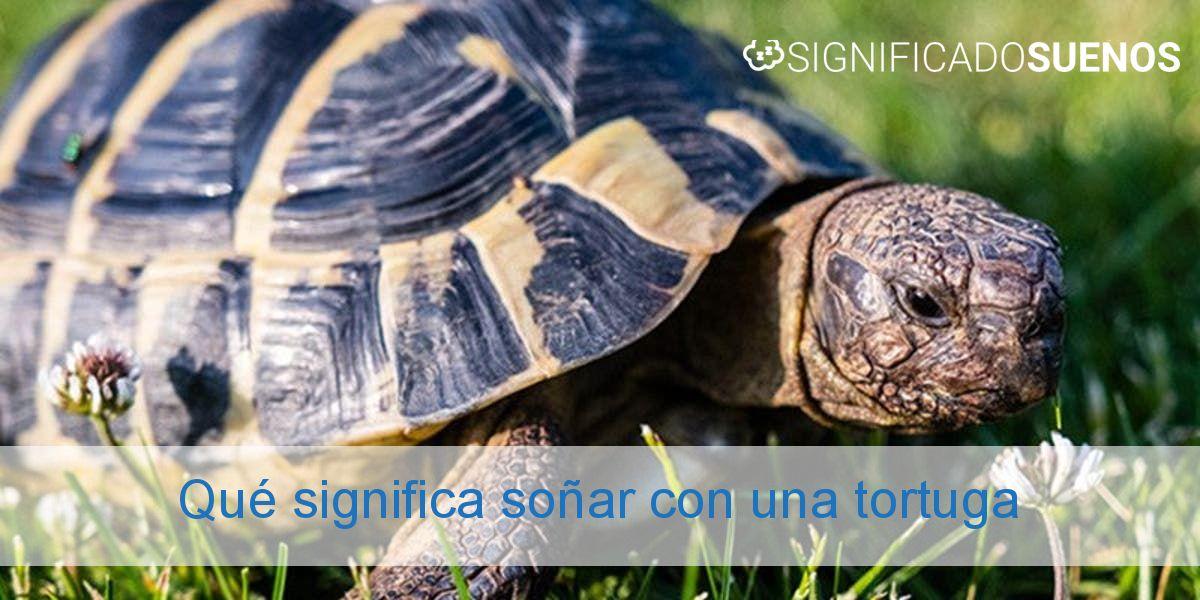 Qué significa soñar con una tortuga
