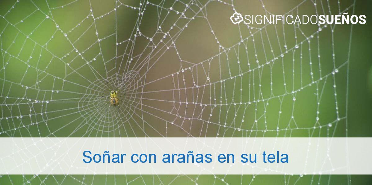 Soñar con arañas en su tela
