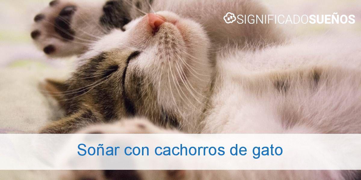 Soñar con cachorros de gato