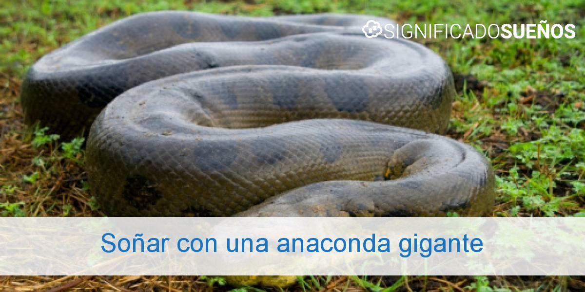 Soñar con una anaconda gigante