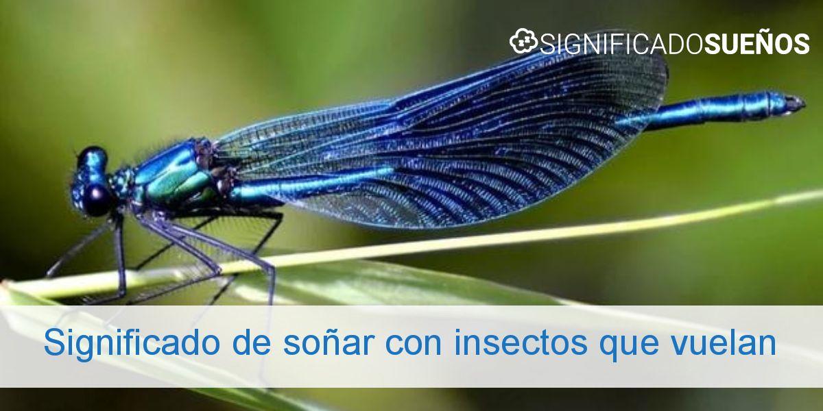 Significado de soñar con insectos que vuelan